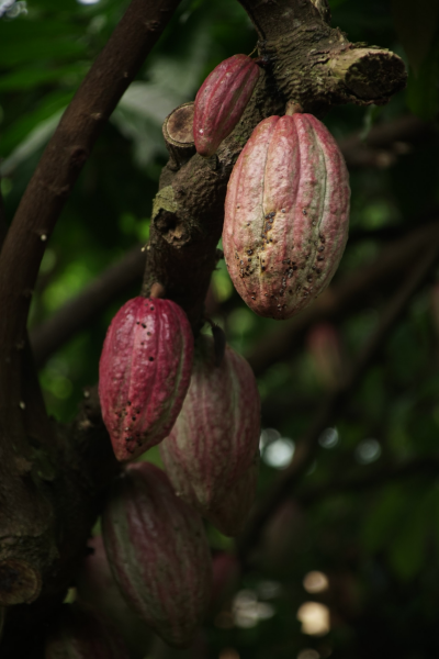 myfoodistry - traditional cooking and modern inspiration - Hershey's against West Africa